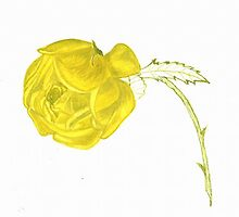Yellow rose by HeidiArts