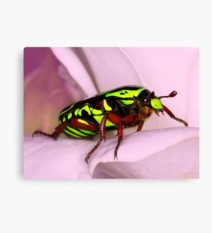 Rose Beetle Canvas Print