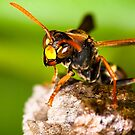 Wasp by Ken Boxsell