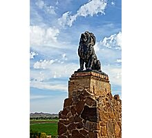 Lion on Grotto Hill Photographic Print