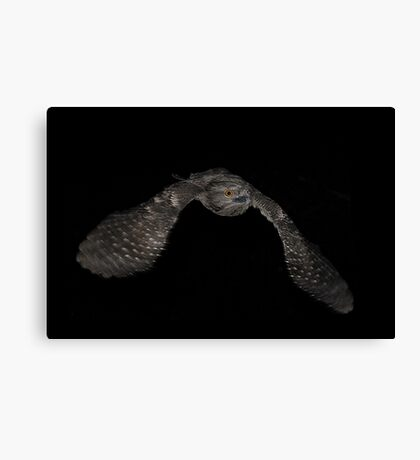 Tawney Frogmouth 2 Canvas Print