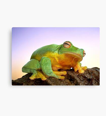 Sunrise Frog Canvas Print