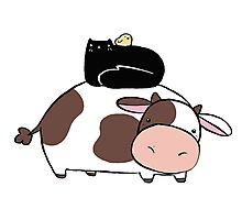 Cow Black Cat and Chick Photographic Print