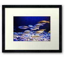 fishes in aqaurium Framed Print