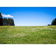 Meadow Photographic Print