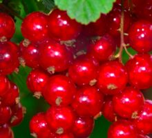 red currants Sticker