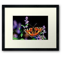 small tortoiseshell butterfly Framed Print
