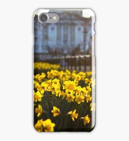 Daffodils in Bloom iPhone Case/Skin