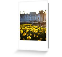 Daffodils in Bloom Greeting Card