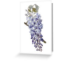 Flower - Wisteria Greeting Card
