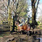 Invierno en Villarrica.       Chile by cieloverde