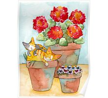 Sleeping Kittens and Geraniums Poster