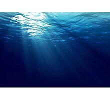 Sea life Photographic Print