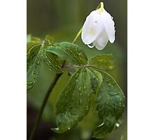 Wildflower -  After The Spring Rain Photographic Print