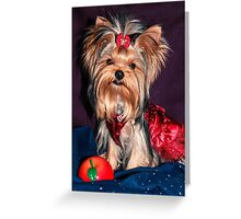 Cute Yorkie Puppy In Red Dress Greeting Card