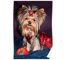 Cute Yorkie Puppy In Red Dress Poster