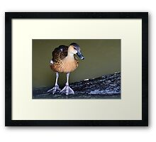I don't want to put my big feet in it! Framed Print