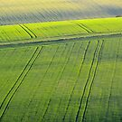 South Downs, Sussex by Stephen Frost