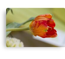 tulip in the garden Canvas Print