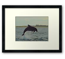 Dolphin from shore Framed Print