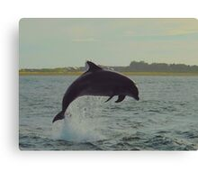 Dolphin from shore Canvas Print
