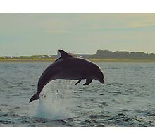 Dolphin from shore Photographic Print