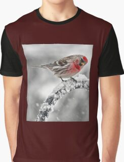 Red Poll -- Cold, But Hungry Graphic T-Shirt