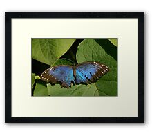 Fragile Butterfly Framed Print