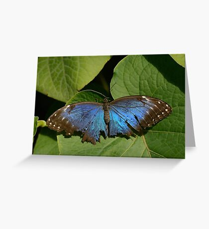 Fragile Butterfly Greeting Card