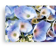 Endless Summer -- Blue Hydrangea Canvas Print