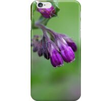 Flowers and blossoms of common comfrey iPhone Case/Skin