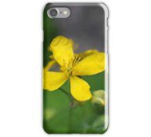 greater celandine or tetterwort iPhone Case/Skin