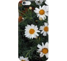 Garden Filled With Daisies iPhone Case/Skin
