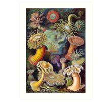 Ernst Haeckel Actiniae Art Print