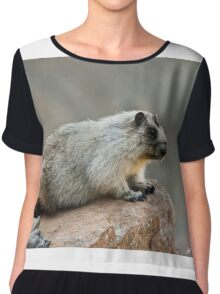 Hoary Marmot on a Boulder Chiffon Top