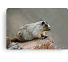 Hoary Marmot on a Boulder Canvas Print