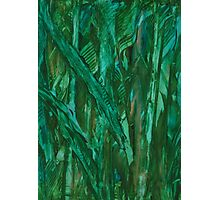 Bamboo Fields Photographic Print