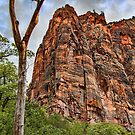 USA. Utah. Zion National Park. Dead Tree. by vadim19