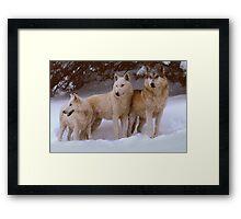 Winter Wolves Framed Print