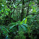 Kiwi Jungle 1 by anorth7