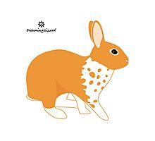 Blanket Brocken Rabbit, Orange Photographic Print
