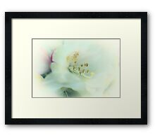 nectar sweet Framed Print