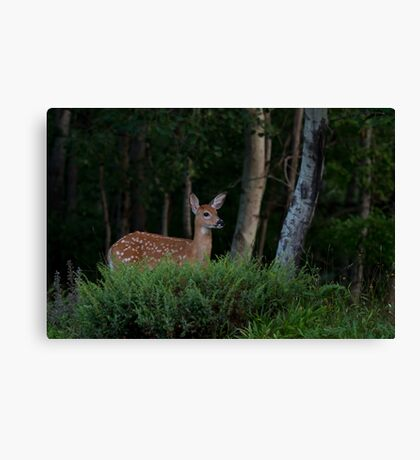 Fawn in forest Canvas Print
