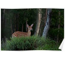 Fawn in forest Poster