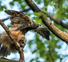 The Big Stretch_Great Horned Owlet by Michael Cummings