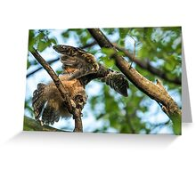 The Big Stretch_Great Horned Owlet Greeting Card
