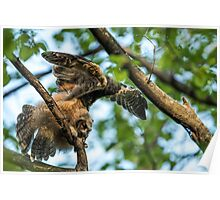 The Big Stretch_Great Horned Owlet Poster