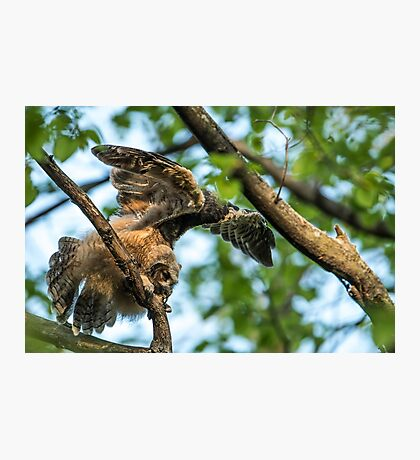 The Big Stretch_Great Horned Owlet Photographic Print