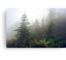 Richmond Pines - New Zealand Canvas Print