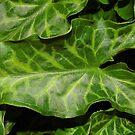 Arum Green Phase by WildestArt
